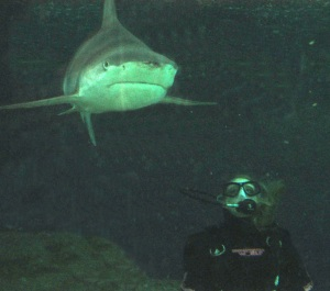 study abroad australia dive swim with sharks future unlimited
